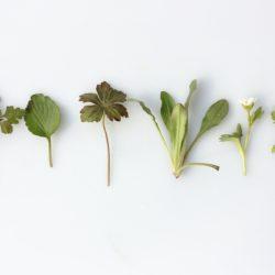 Les herbes, les plantes et les champignons en cuisine